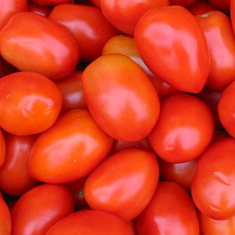 Roma tomatoes with their distinct elongated egg shape